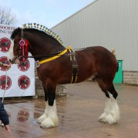 Actualites - 201803 - Shire Horse Society Spring Show in Stafford